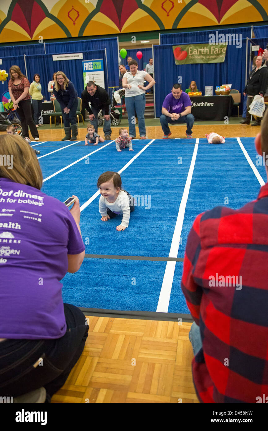 Babies compete in a Diaper Derby race - Stock Image