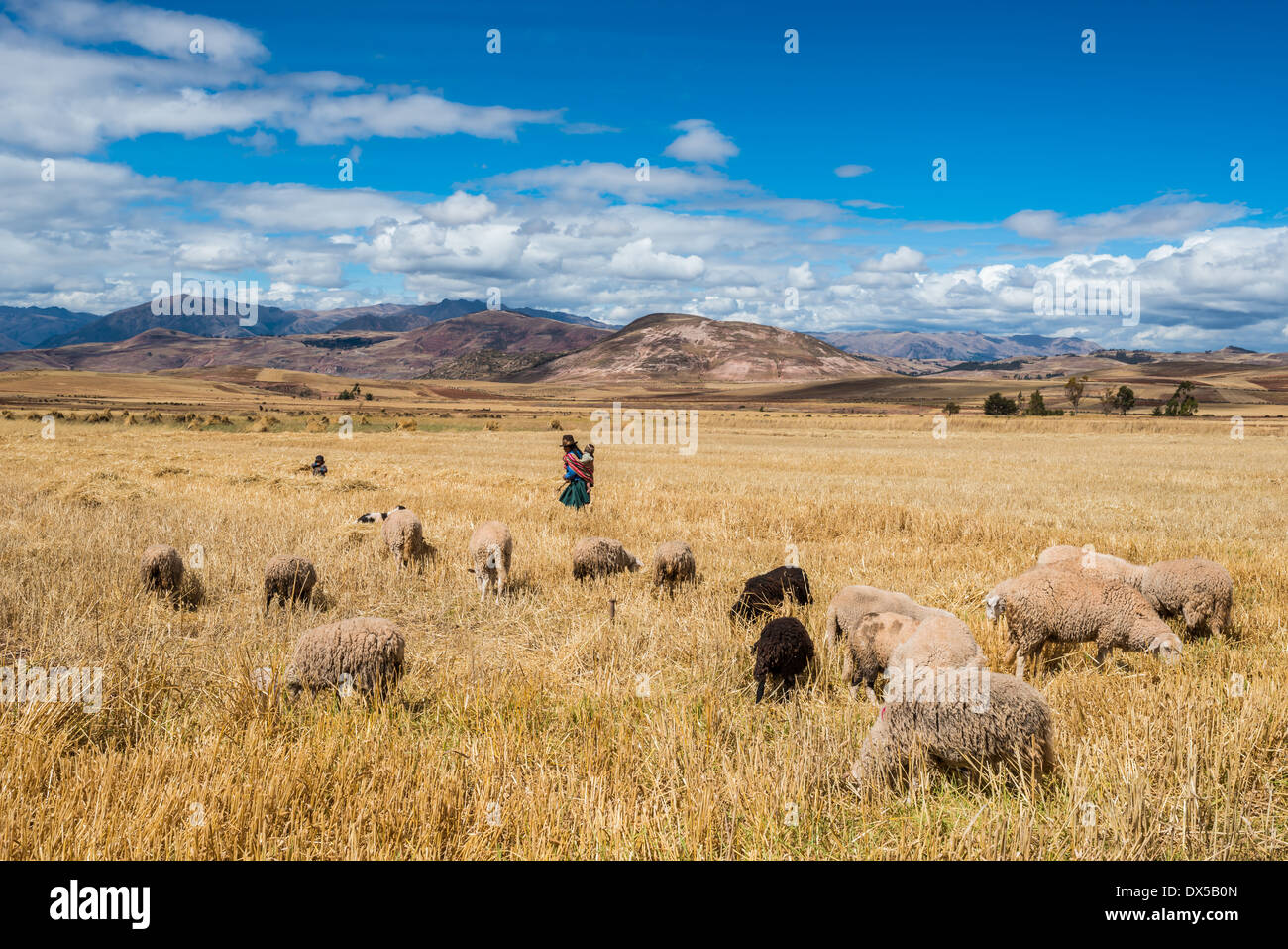 woman shepherd in the peruvian Andes at Cuzco Peru - Stock Image