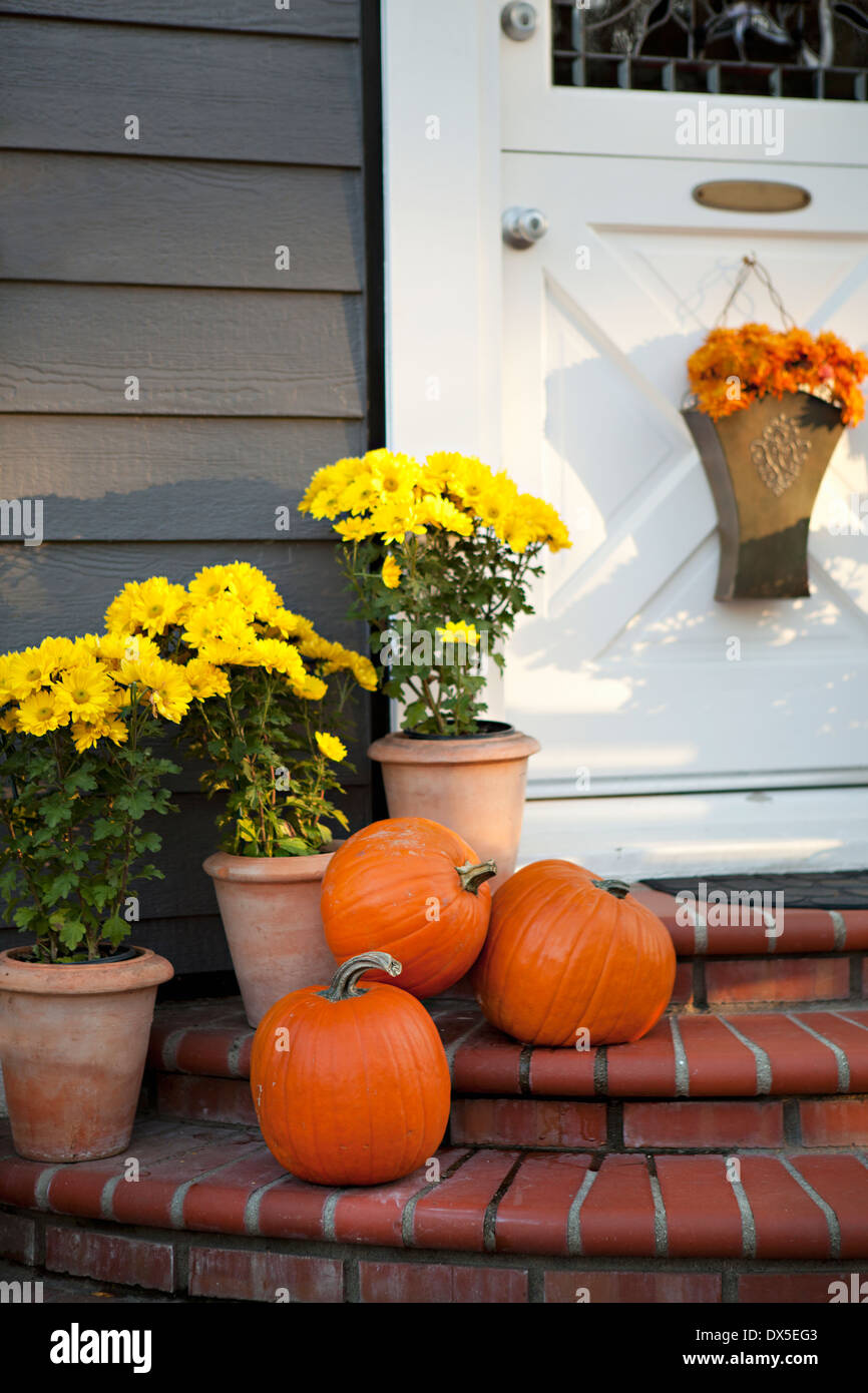 Pumpkins and yellow flowers in flowerpot on front stoop - Stock Image