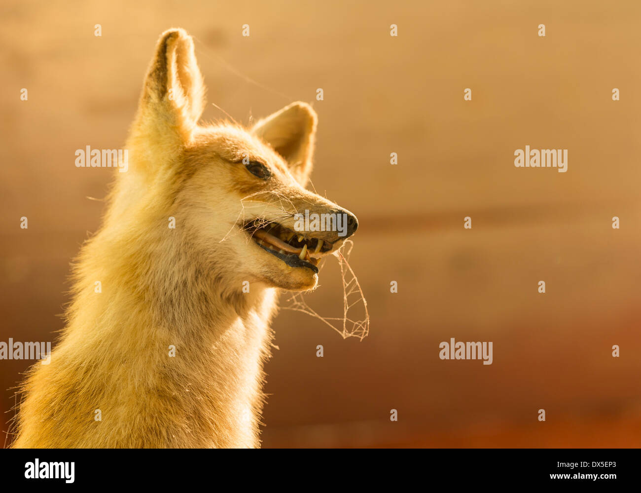 Taxidermy Stock Photos Taxidermy Stock Images Alamy