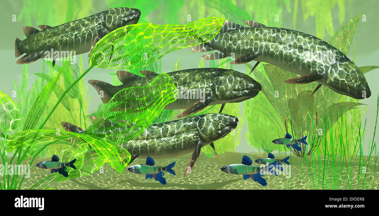 Dipterus is an extinct freshwater lungfish from the Devonian Period of Australia and Europe. - Stock Image