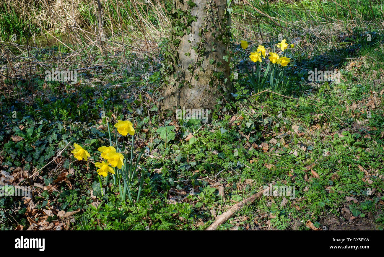 Early Spring Flowers Growing Wild In An English Forest North Stock
