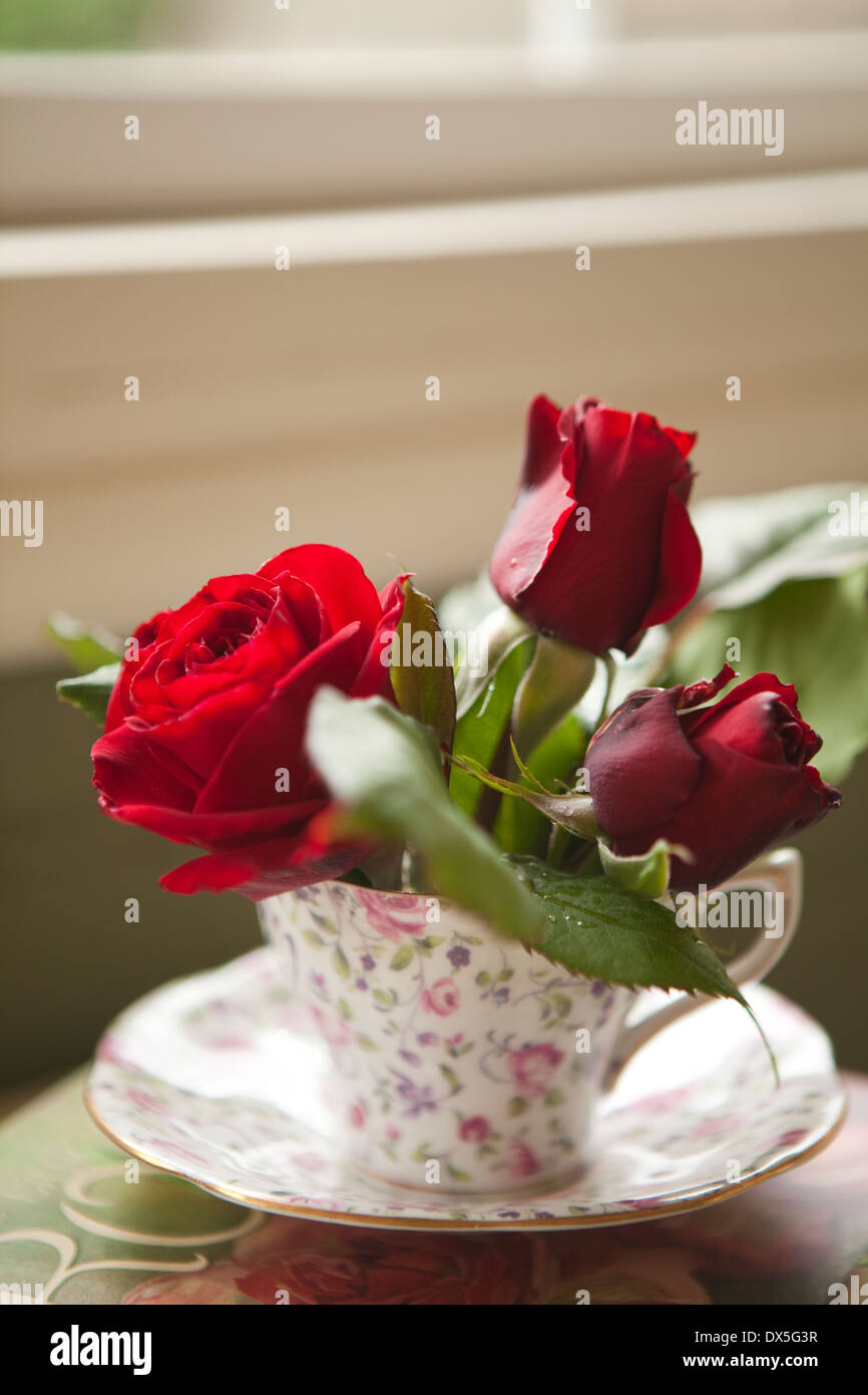 Red roses in feminine floral teacup by windowsill, close up Stock Photo