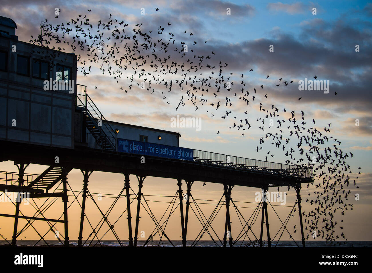 Aberystwyth Wales UK, Tuesday 18 March 2014  At dusk every day during the winter and early spring, tens of thousands of starlings gather in huge 'murmurations' before roosting for the night on the cast iron legs of the Victorian seaside pier at Aberystwyth on the west  wales coast, UK   photo Credit: keith morris/Alamy Live News - Stock Image