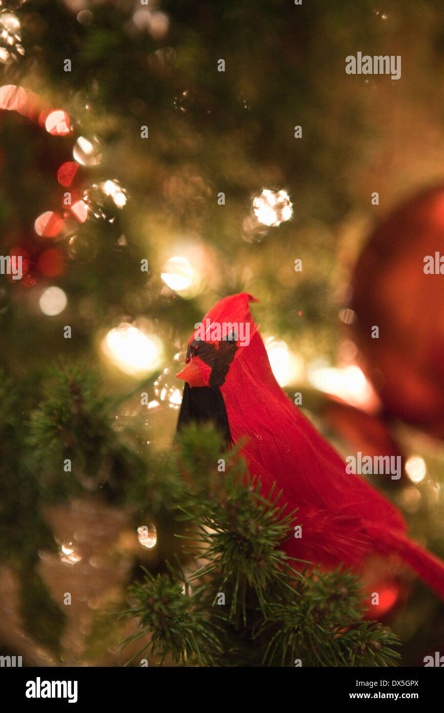 Red cardinal bird ornament in illuminated Christmas tree, close up - Stock Image