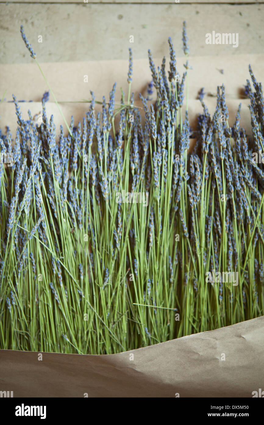 Dried lavender on craft paper, directly above - Stock Image