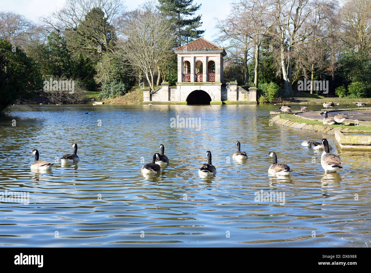 Geese swimming towards the famous boathouse in Birkenhead Park, Wirral, UK - Stock Image