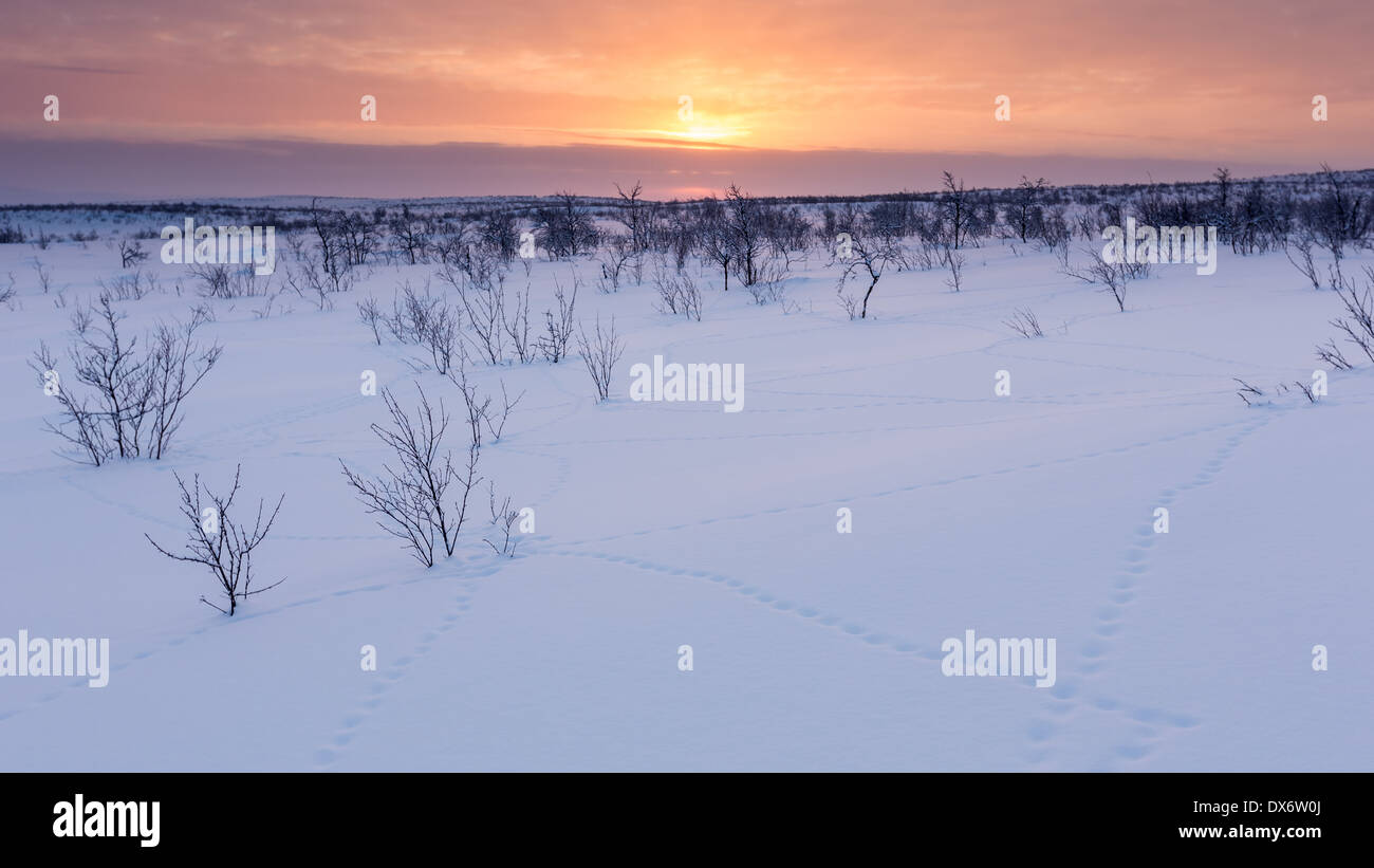 Willow grouse's tracks in the snow, Enontekiö, Lapland, Finland, EU - Stock Image