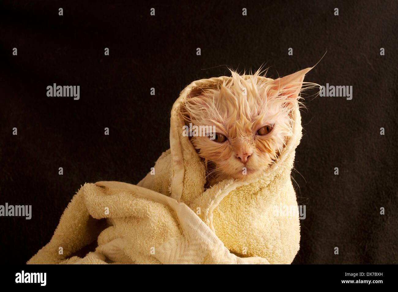 Wet kitty - Stock Image