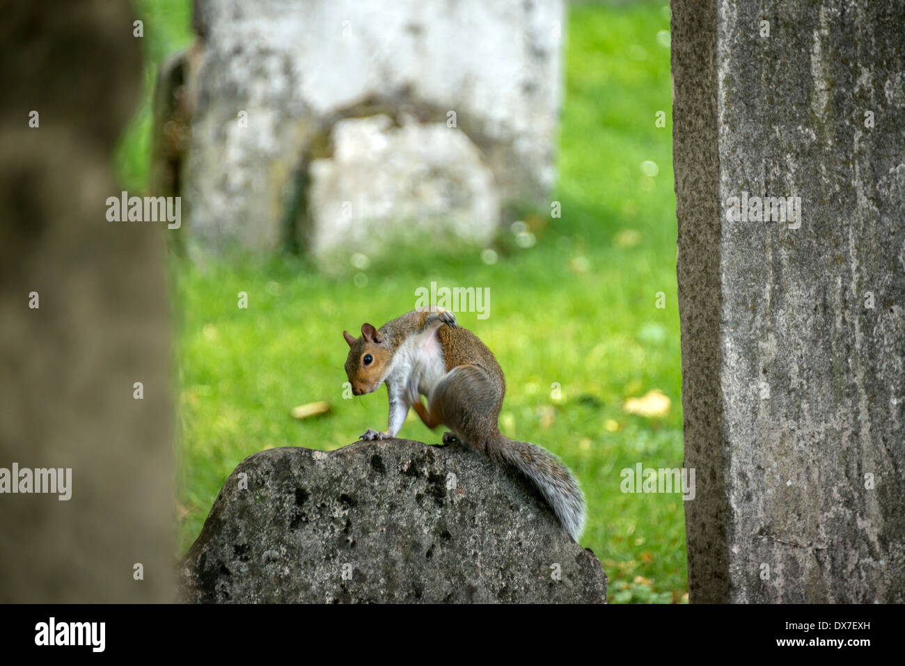 Bunhill Fields, an old burial ground in the London Borough of Islington, north of the City of London, & is a haven for wildlife - Stock Image