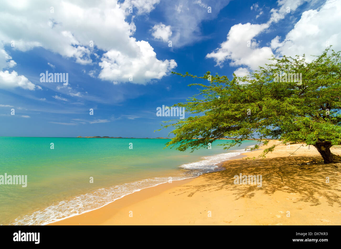 Deserted tropical beach in Pusheo in La Guajira, Colombia with a single solitary tree - Stock Image