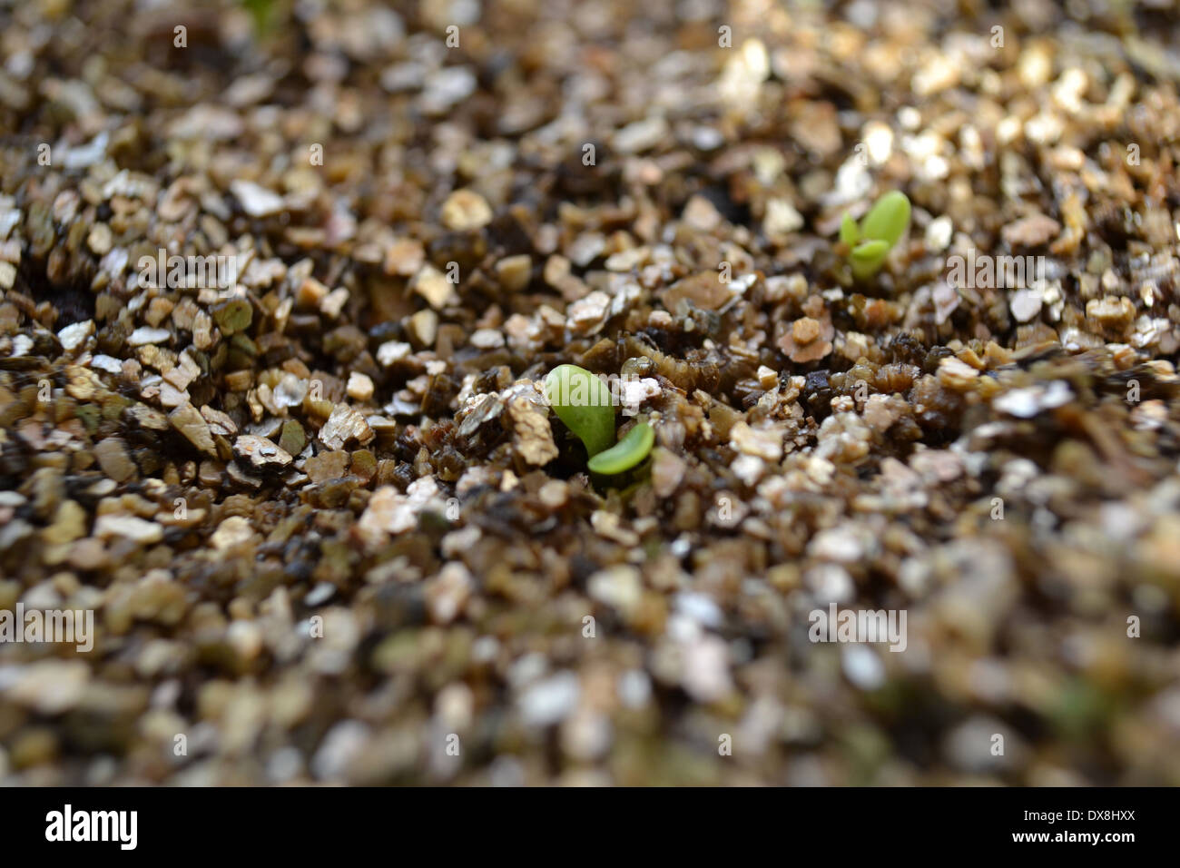 Vermiculite Stock Photos & Vermiculite Stock Images - Alamy