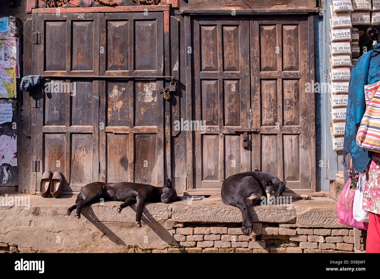 Sleeping dogs on the street of Kathmandu - Stock Image