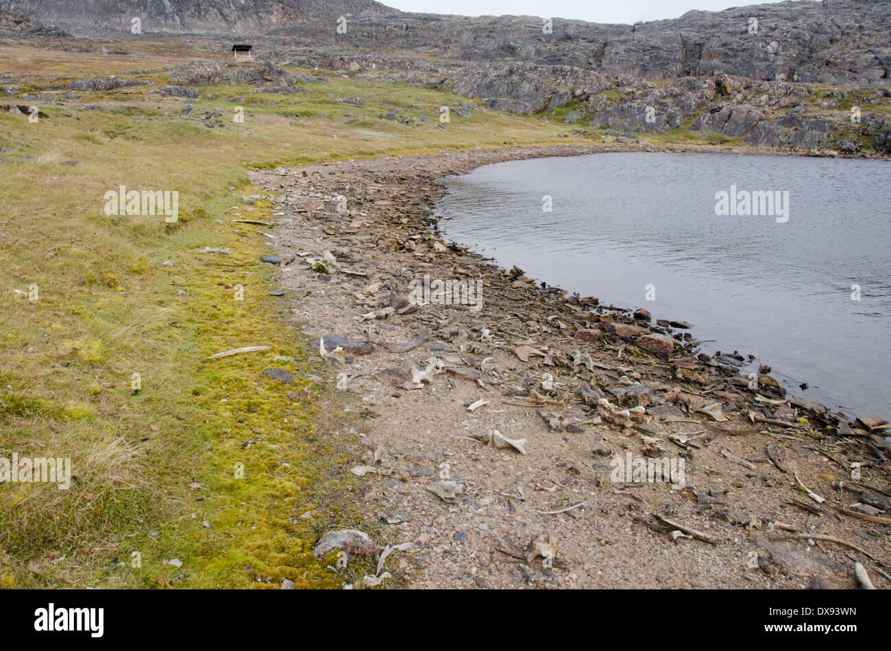 Canada, Nunavut, Cape Dorset. Mallikjuag Territorial Park, archaeological site. Animal bone. - Stock Image