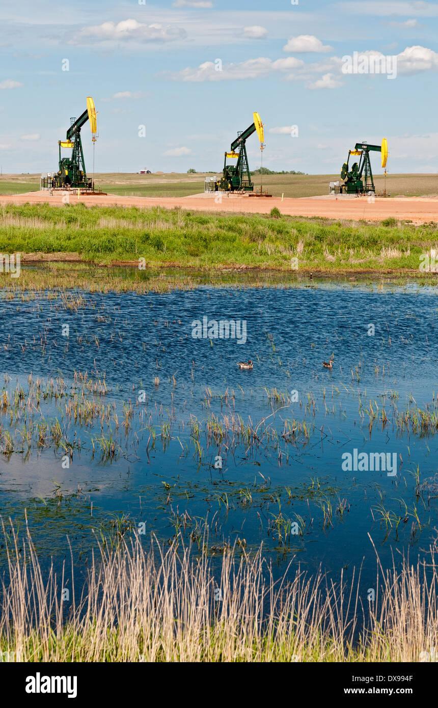 North Dakota, Williston Basin, Bakken Shale Oil Formation Region, oil well pumpjacks, ducks in wetland - Stock Image