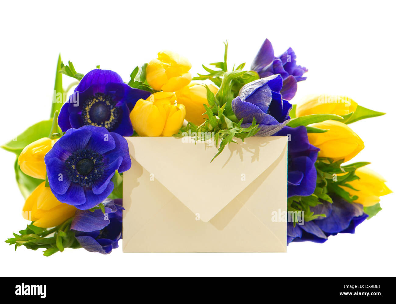 Blue anemone cut out stock images pictures alamy colorful flowers bouquet with gift card yellow tulips and blue anemone on white background izmirmasajfo