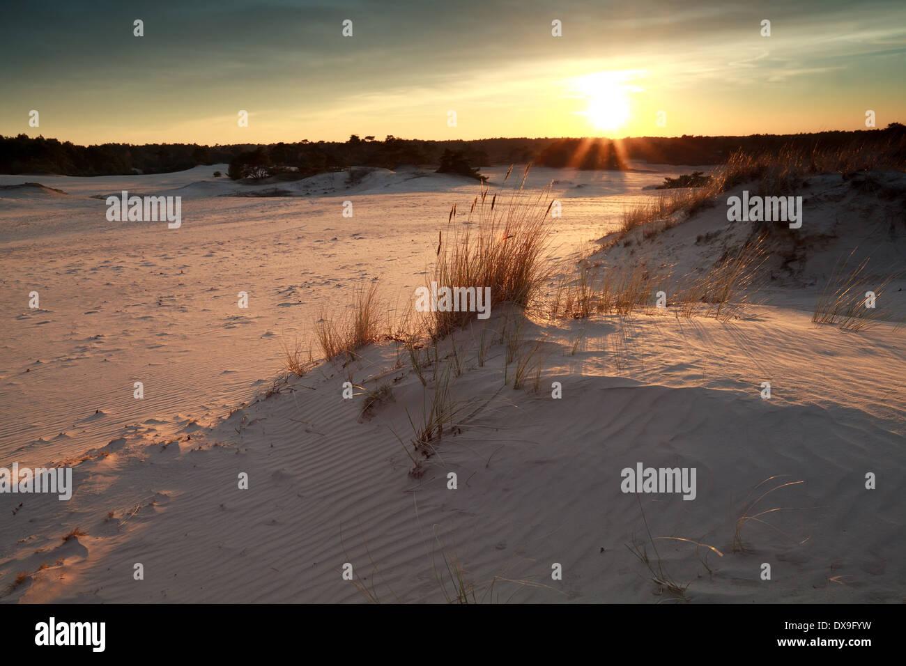 gold sunset over sand dunes, Gelderland, Netherlands - Stock Image