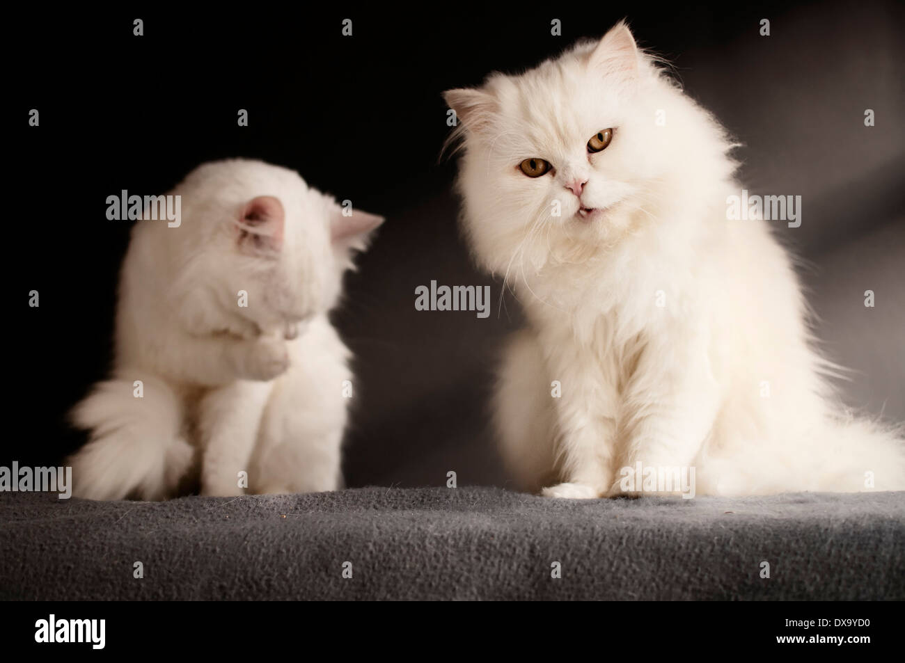 Two cats - Stock Image