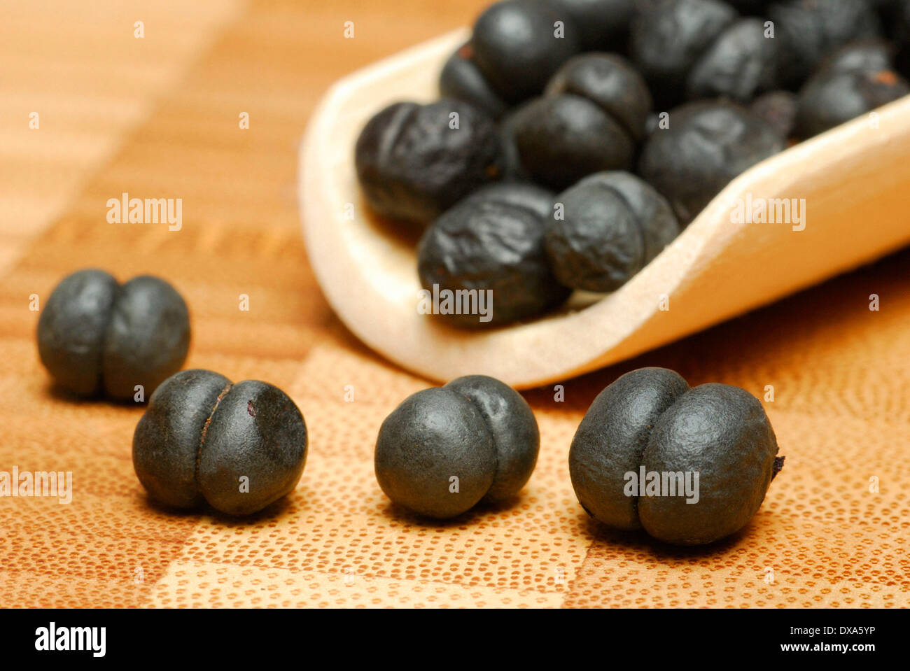 Tasmanian Pepper, Mountain Pepper Stock Photo