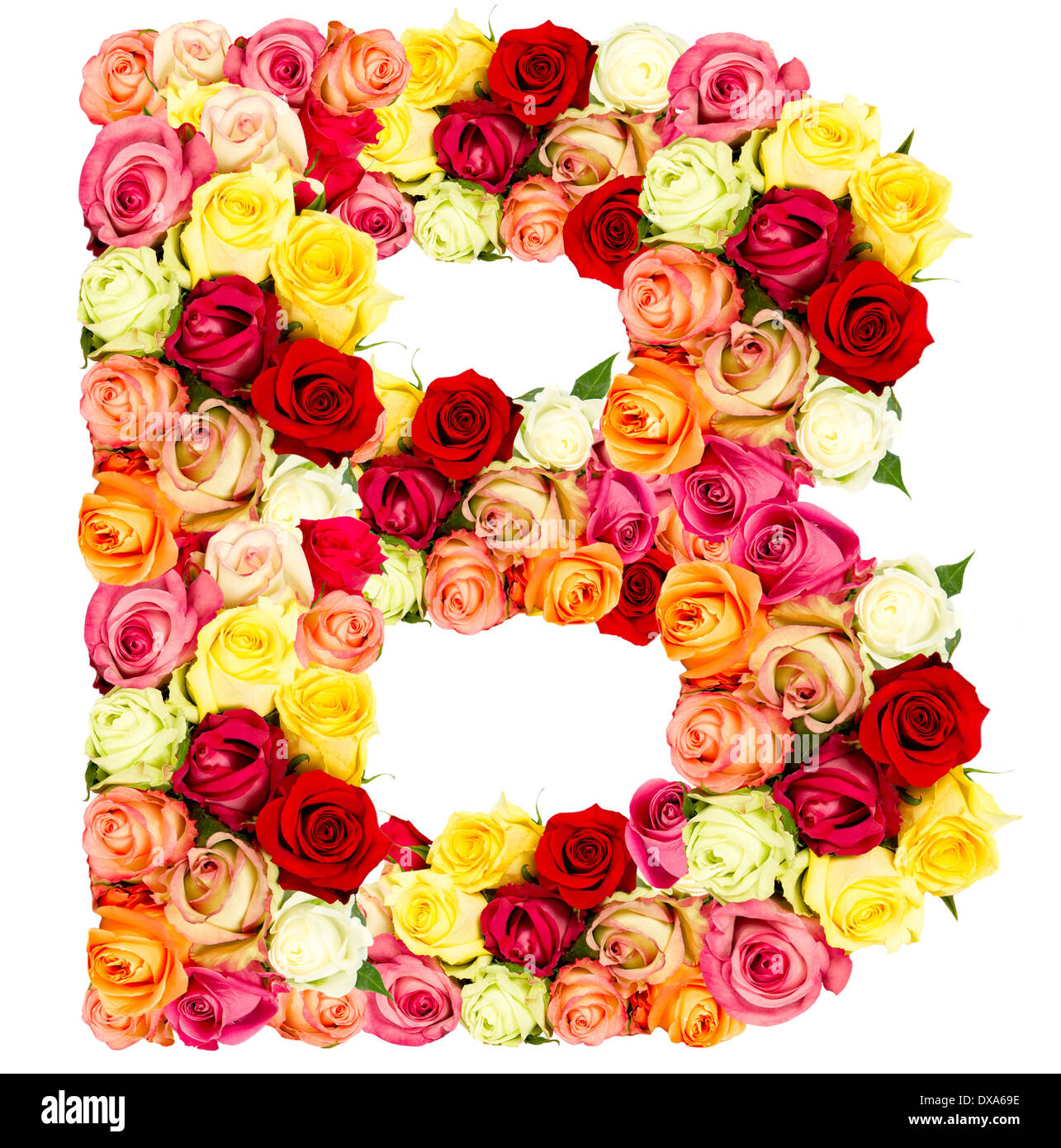 B  Roses Flower Alphabet Isolated On White Stock Photo