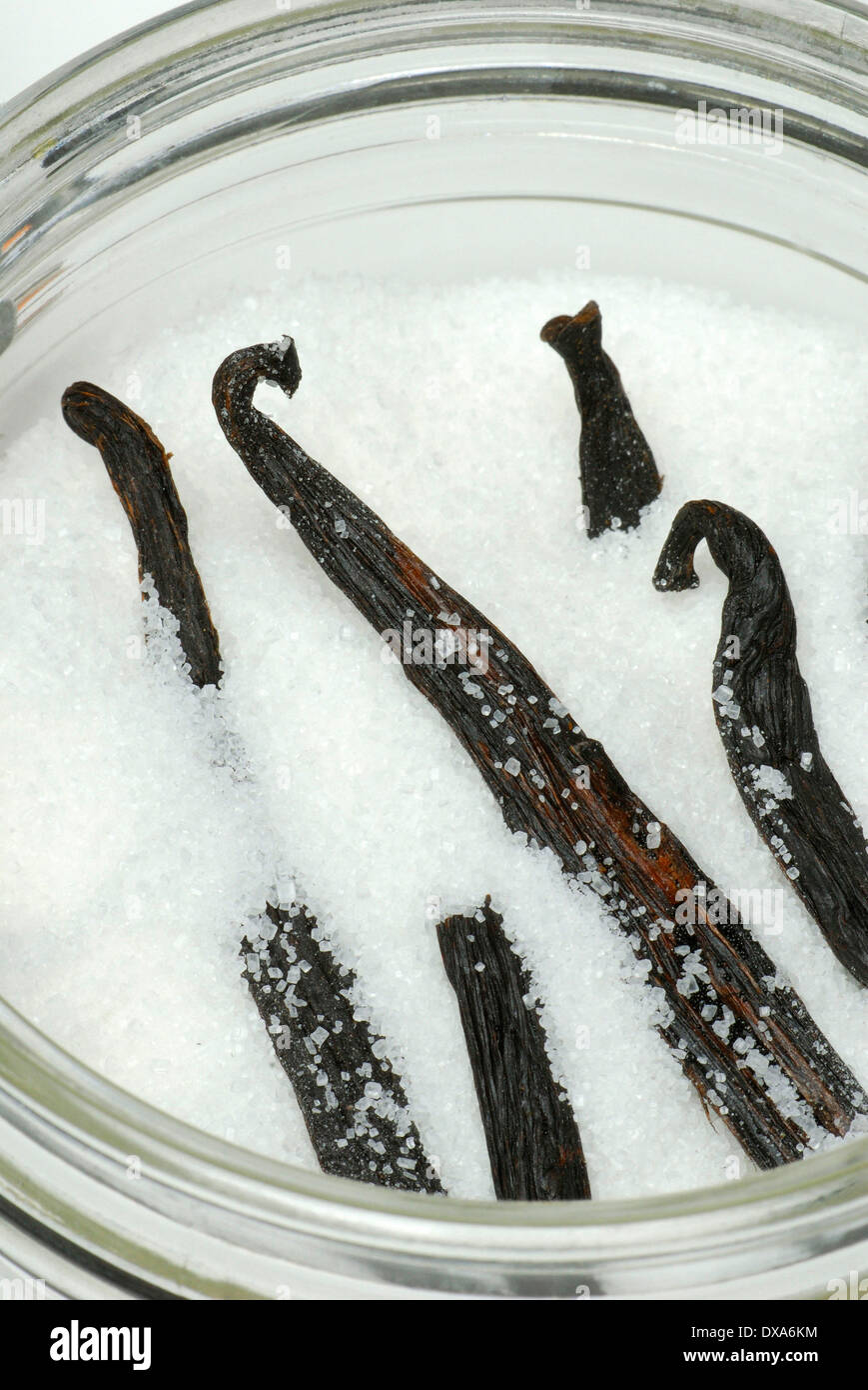 Vanilla pods in sugar - Stock Image