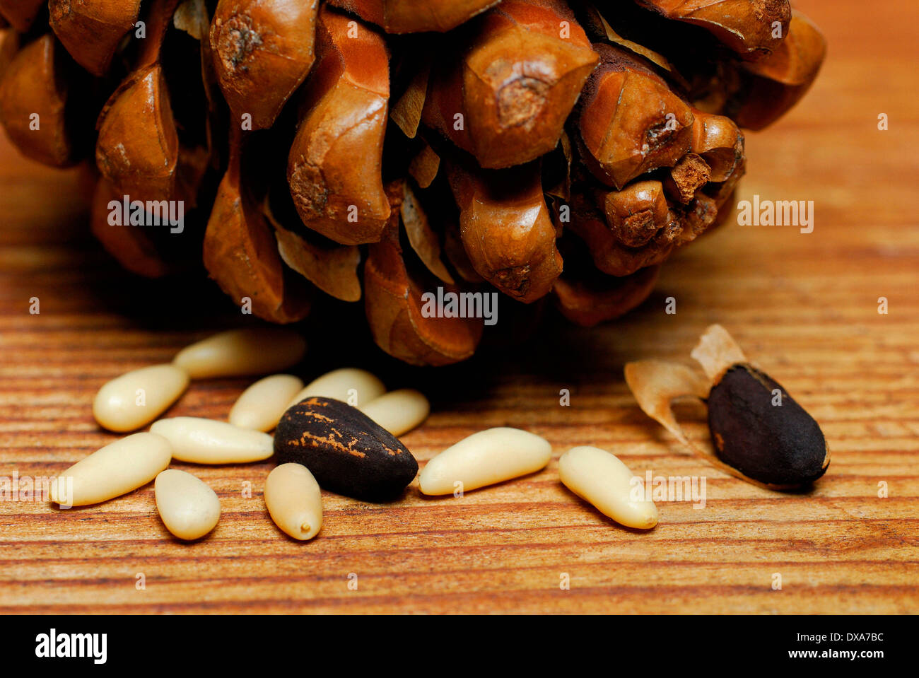 Pine nut - Stock Image