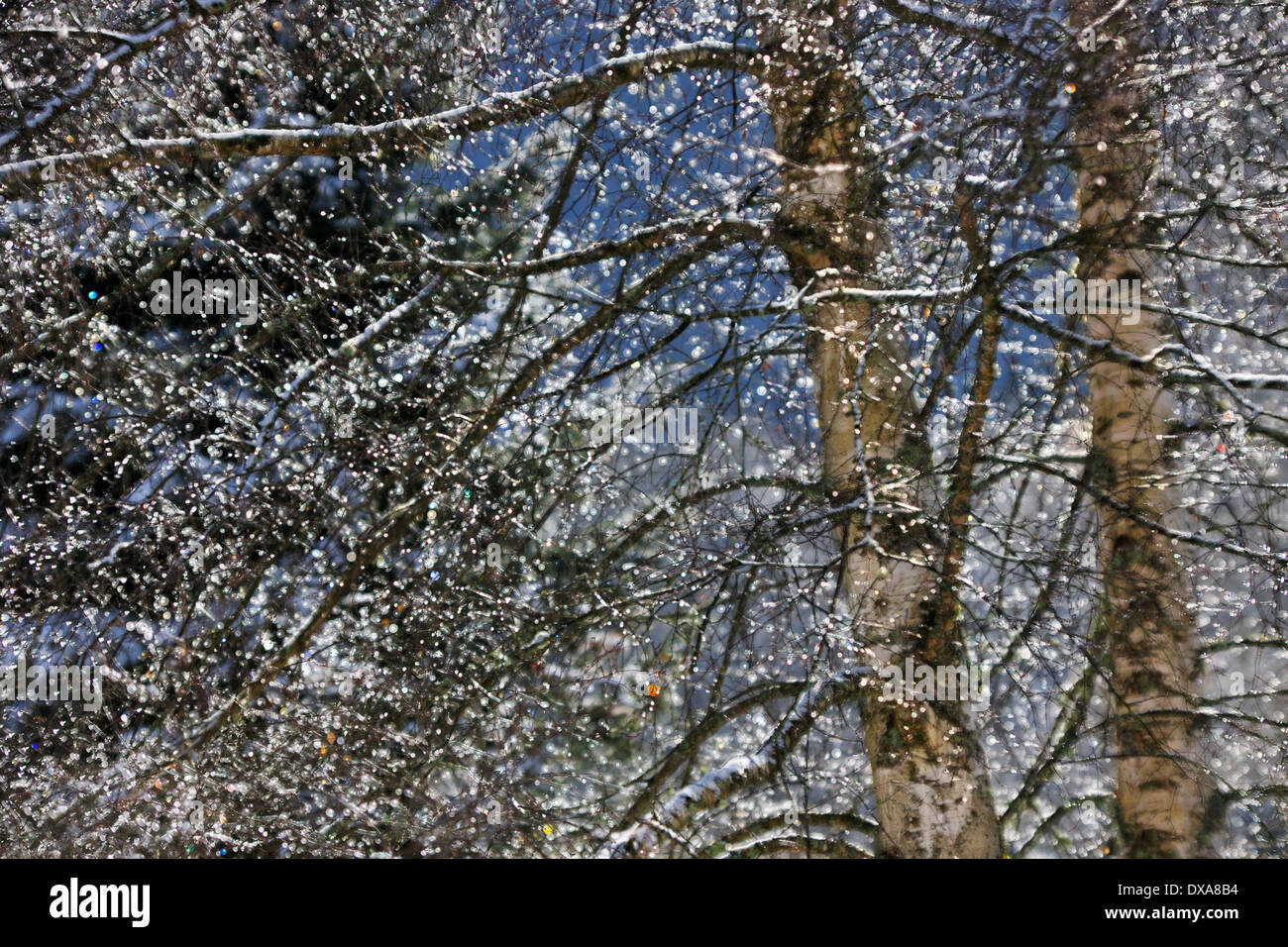 Braches and tree in winter. - Stock Image