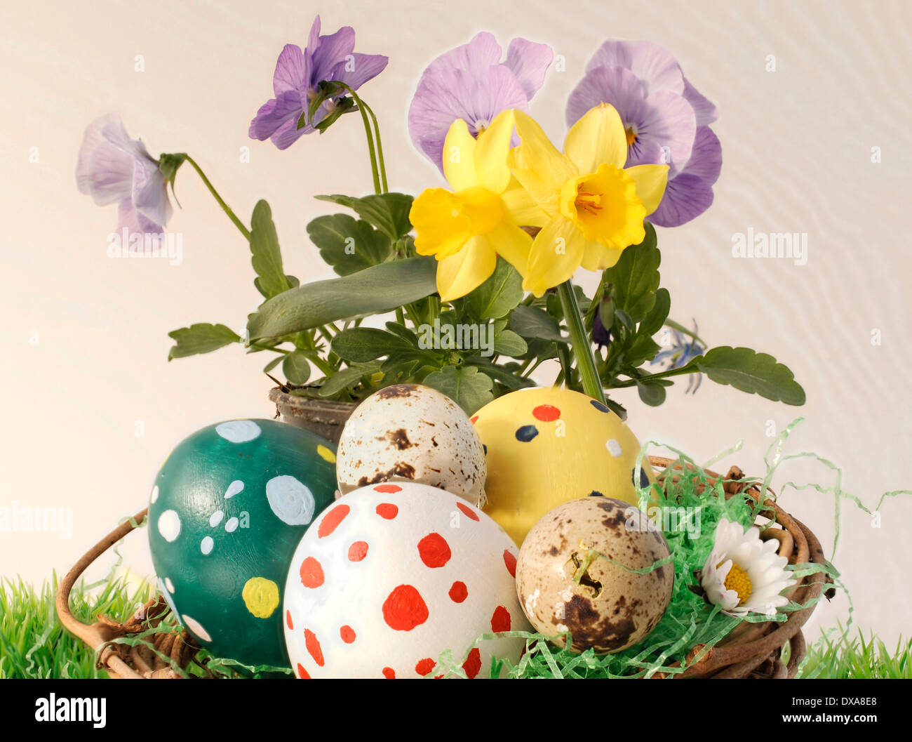 colorful easter eggs and spring flowers - Stock Image