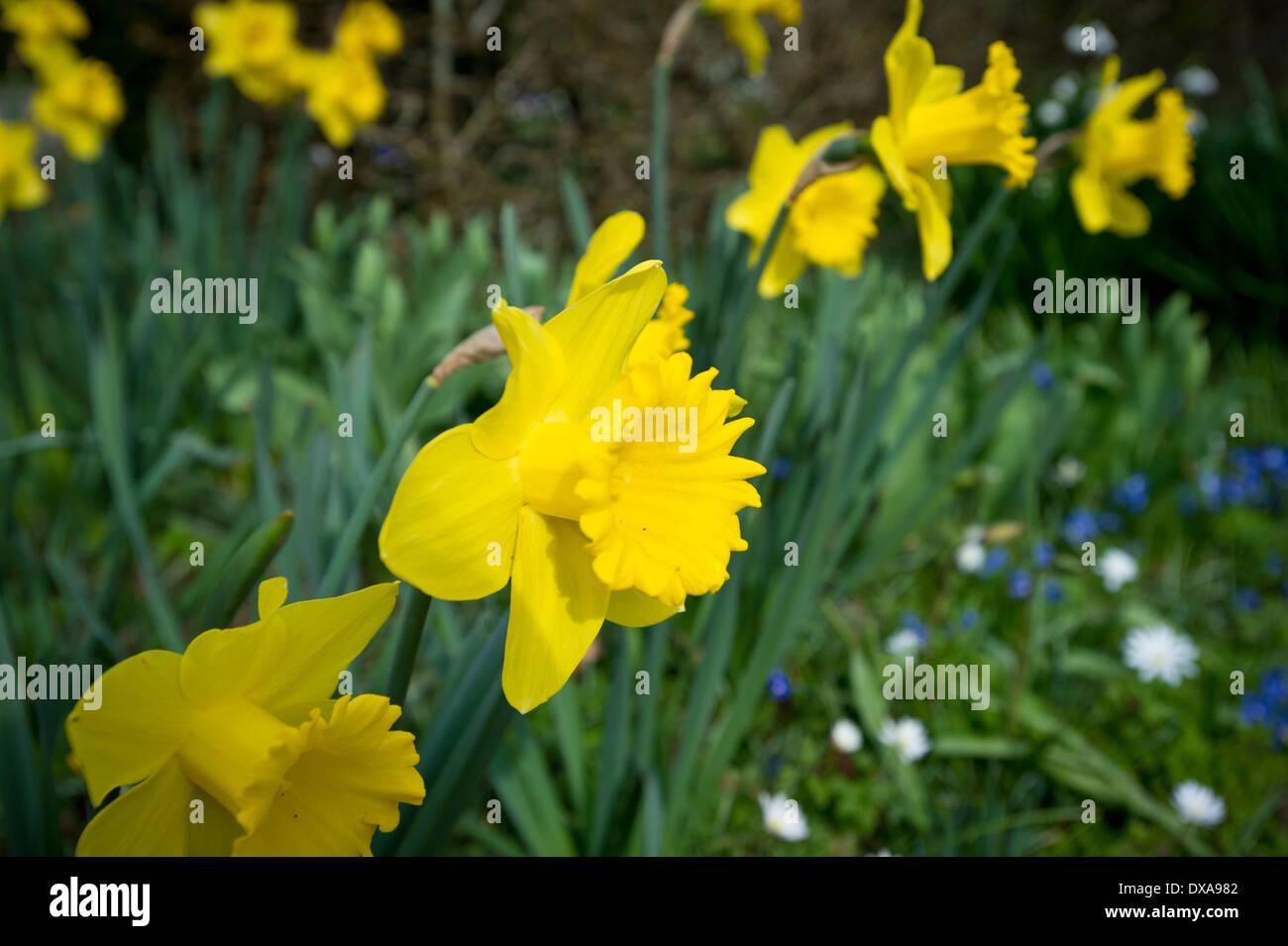 Spring Flowers In Uk Stock Photo 67838962 Alamy