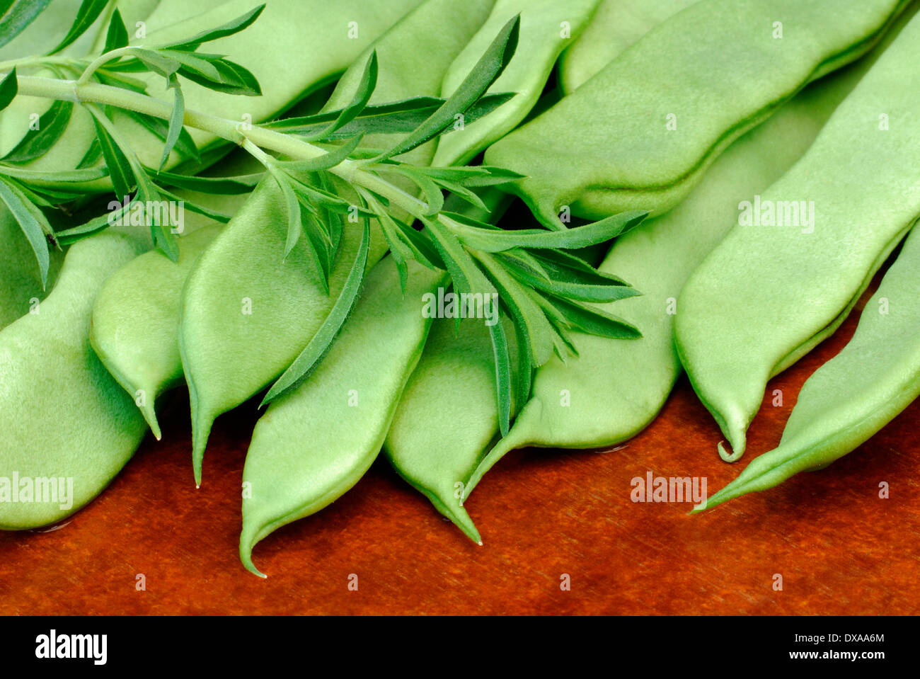 Beans and Summer Savory Stock Photo