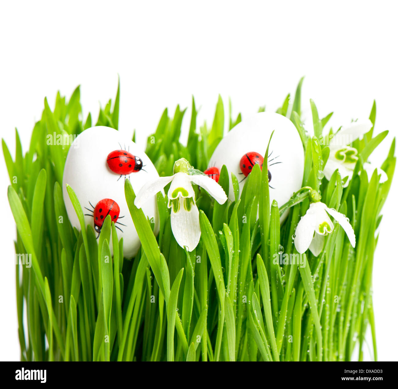 Fresh Green Grass With Flowers And Easter Eggs On White Background