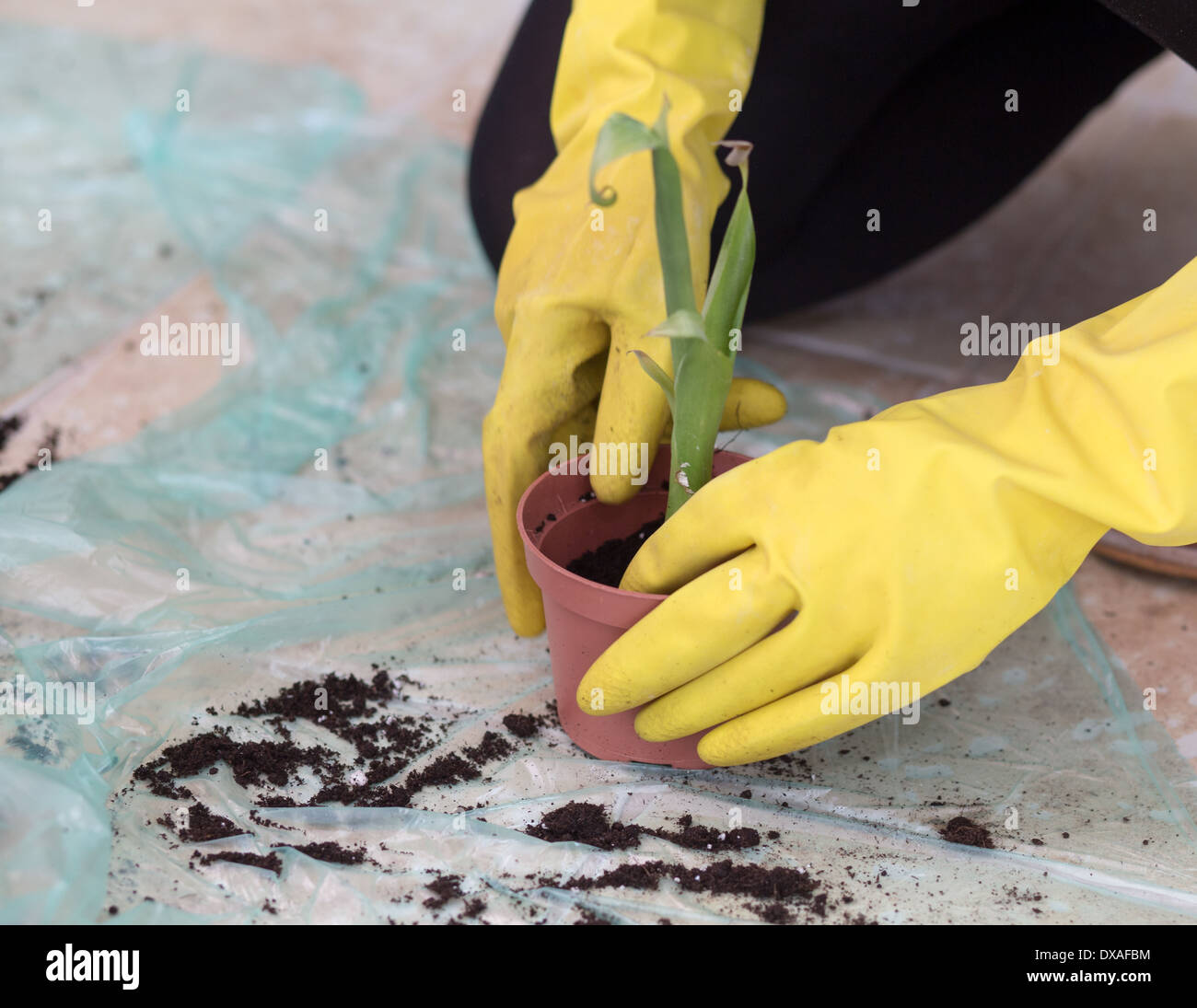 work at home planting a flower and spring cleaning stock photo