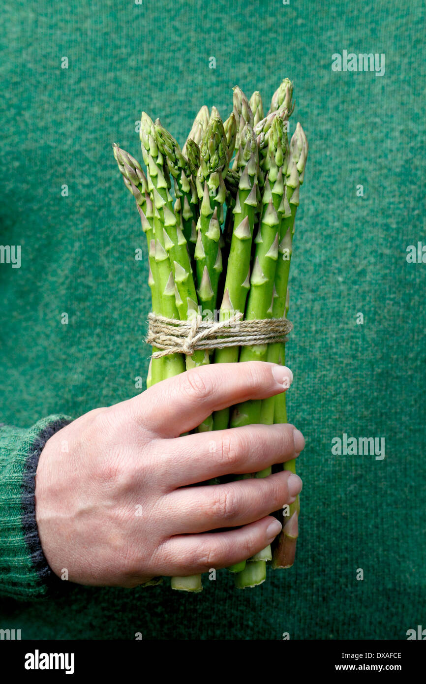 Man holding fresh green asparagus (Asparagus officinalis) spears against green wool jumper background in a garden, UK - Stock Image