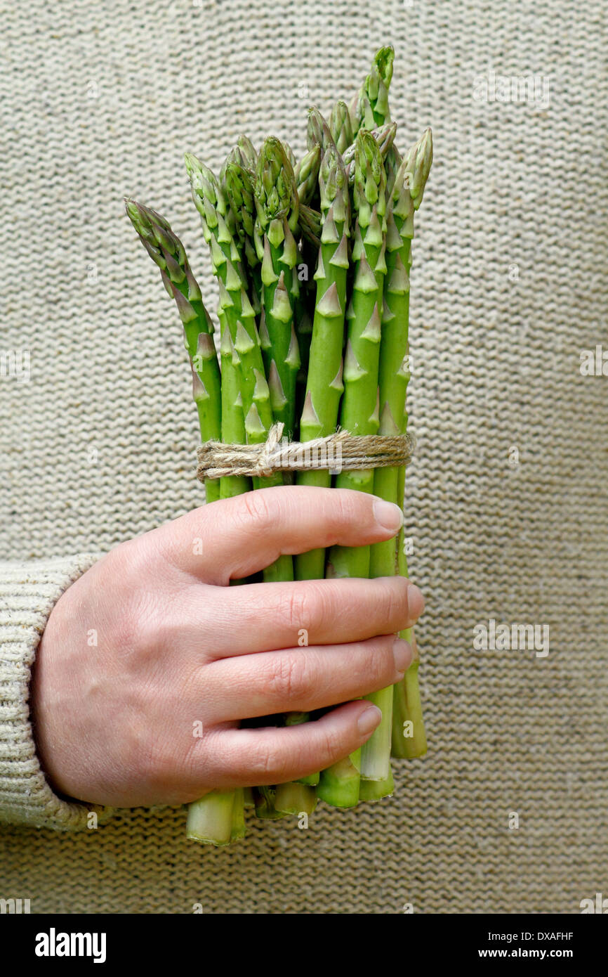Man holding fresh green asparagus (Asparagus officinalis) spears in a garden, UK - Stock Image
