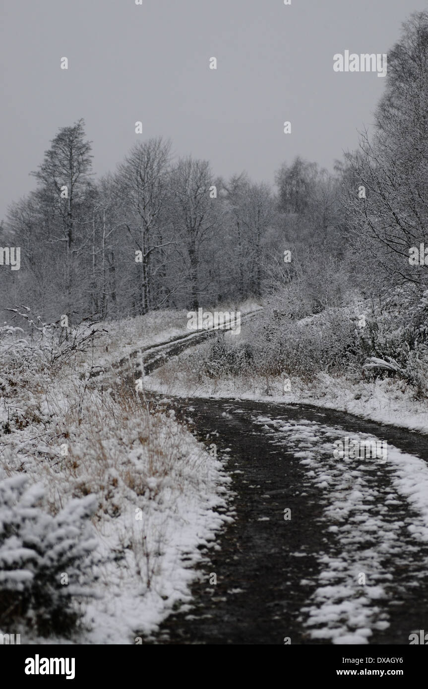 Snow cover forest track near Sherrifmuir, Stirling, Scotland. Stock Photo