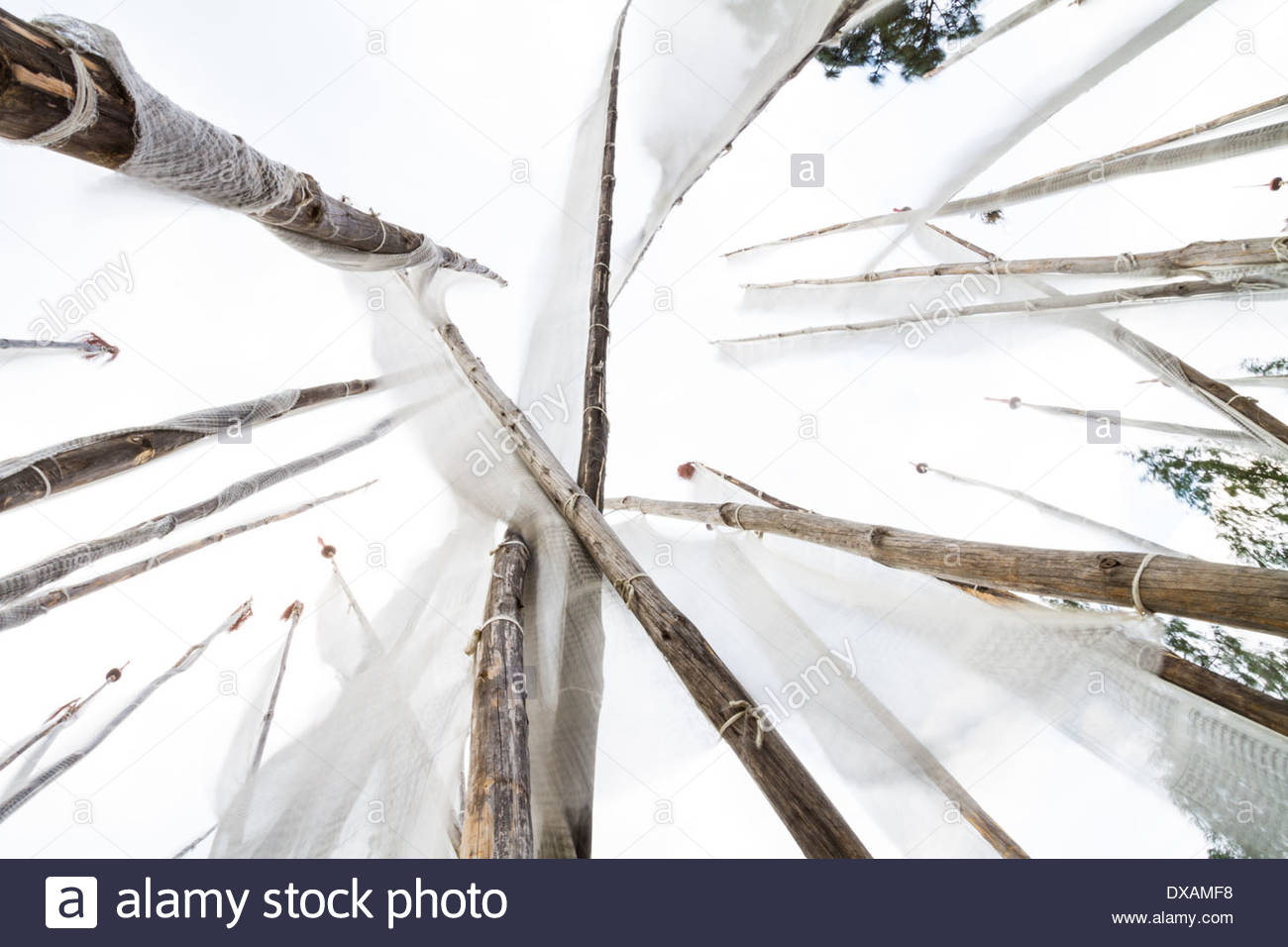 Looking up, Buddhist prayer flags flap in the wind in Punakha, Bhutan - Stock Image