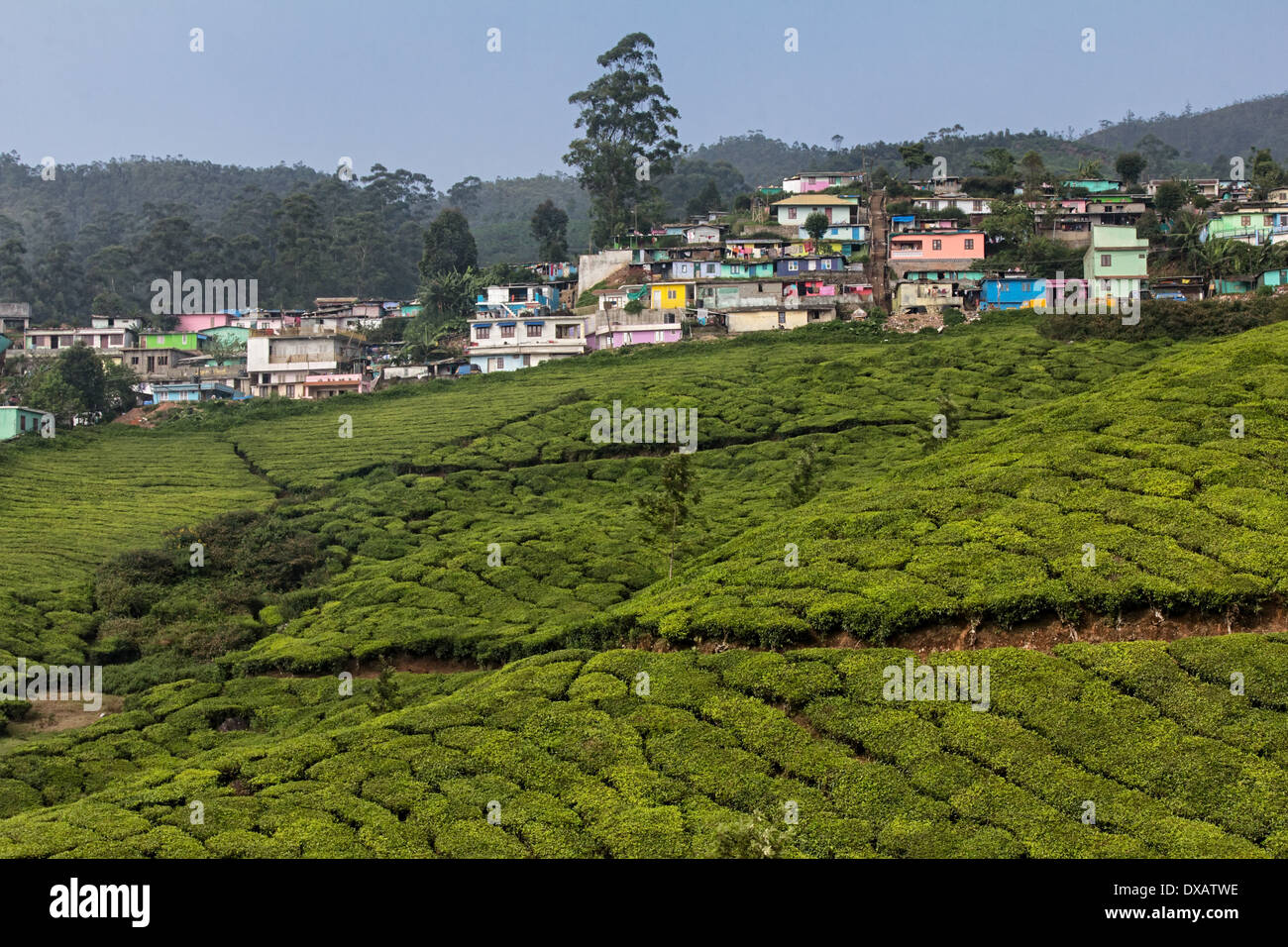 Pastel Coloured Houses At The Top Of Tea Plantations In Munnar Kerala India