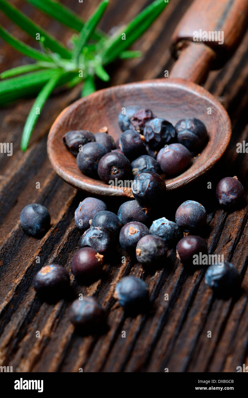 Juniperus communis - Stock Image