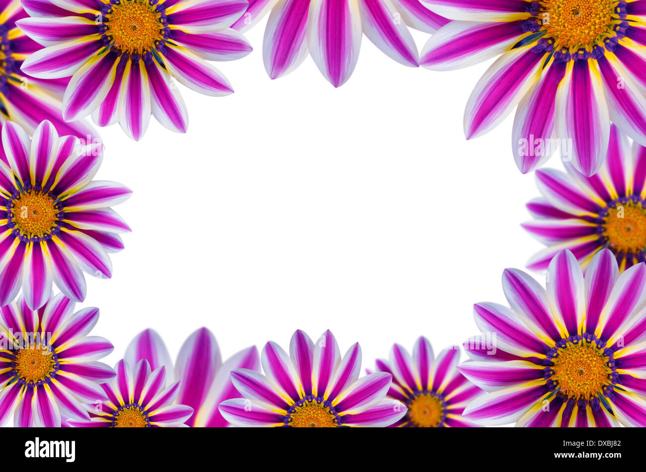 Daisy flowers border copy space stock photos daisy flowers border daisy flowers border with copy space flower background stock image izmirmasajfo