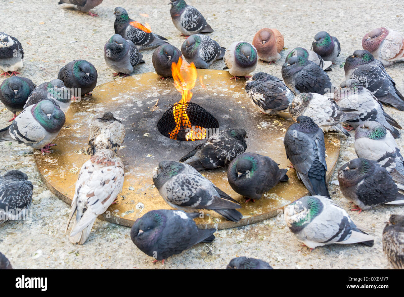Pigeons trying to keep warm by an eternal flame in a harsh Chicago winter - Stock Image