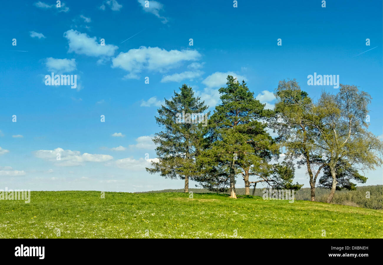 Meadow and blue sky in the Black Forest - Stock Image