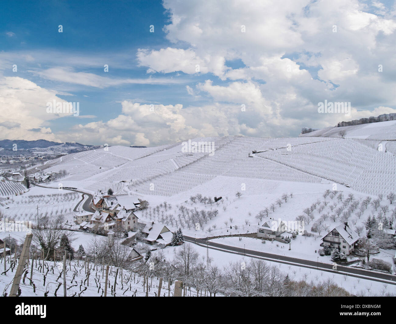 snow-covered vineyards, the Black Forest, Germany - Stock Image