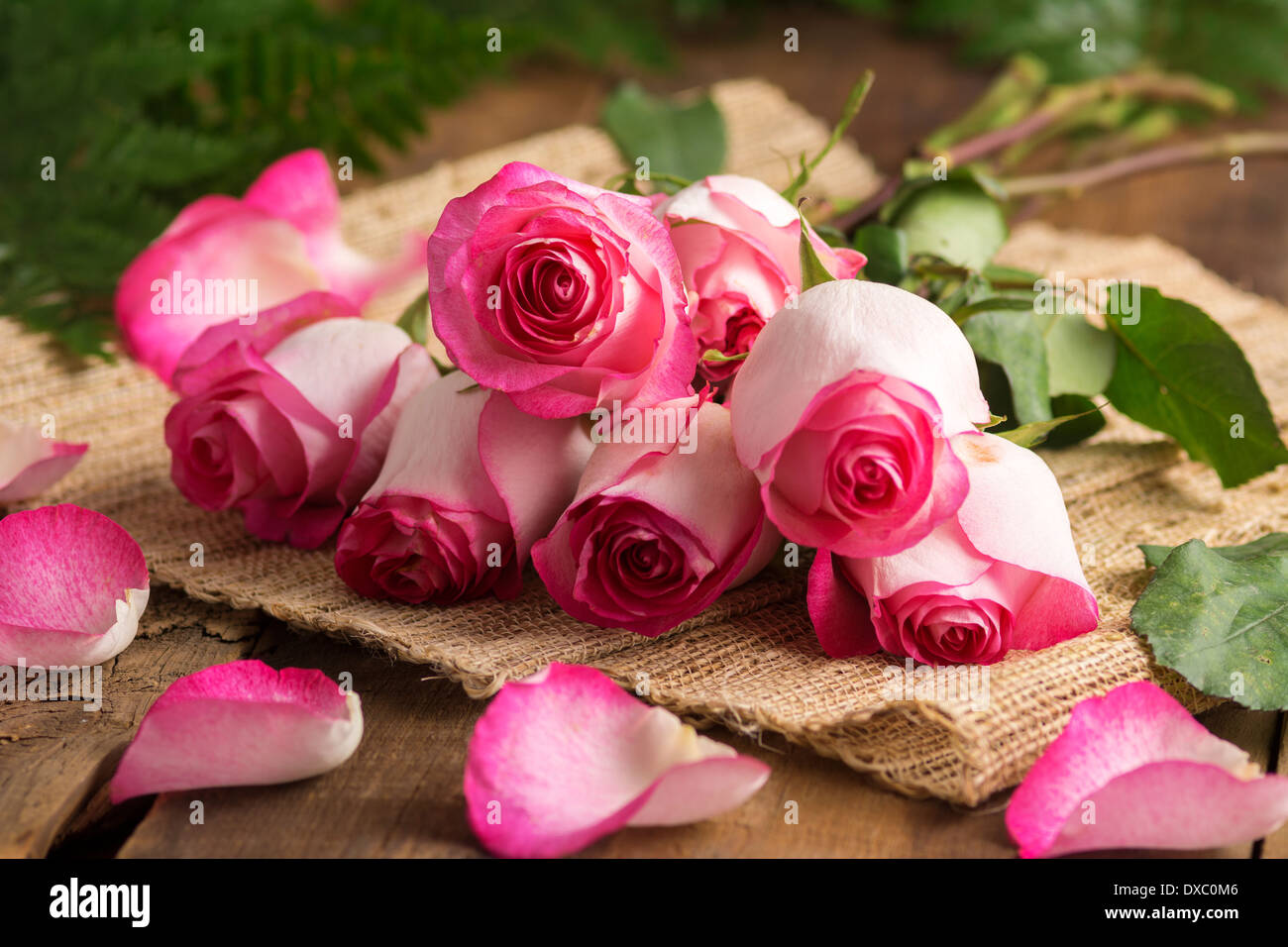 Pink roses on burlap ready to arrange - Stock Image