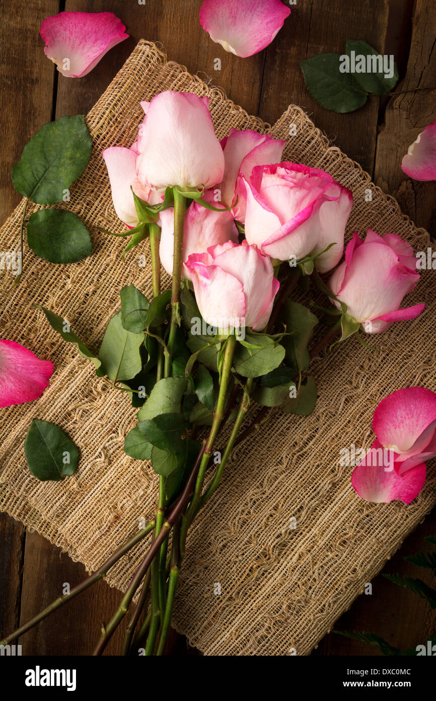 Pink roses on burlap ready to arrange shot from above - Stock Image