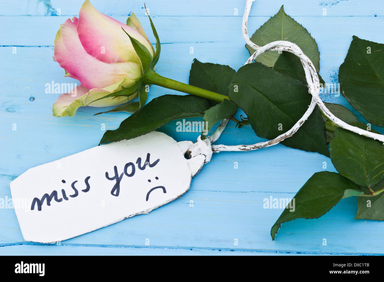 A Pink Rose On A Blue Background And A Personalised Tag Saying U0027miss Youu0027.  Perfect For Those In Love And For Valentineu0027s Day.