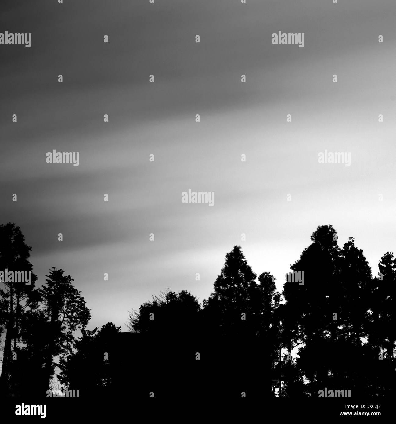 Trees in Yamato, Kanagawa Prefecture, Japan - Stock Image