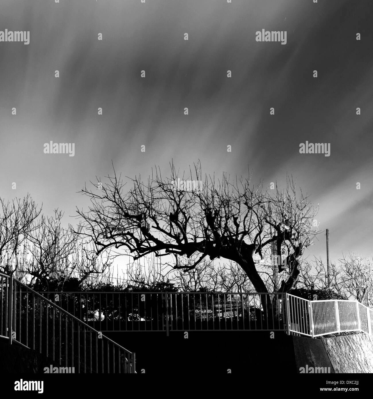 Tree in Yamato, Kanagawa Prefecture, Japan - Stock Image