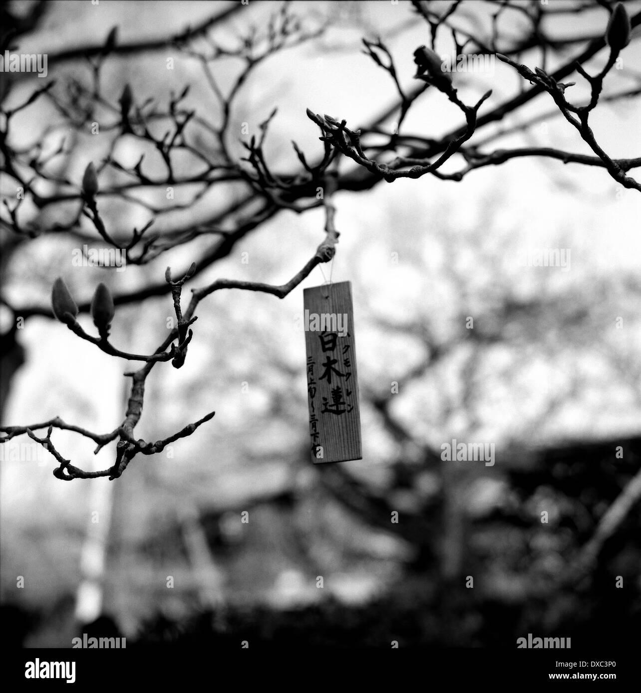 Wooden Tablet On A Tree In Kamakura, Kanagawa Prefecture, Japan - Stock Image