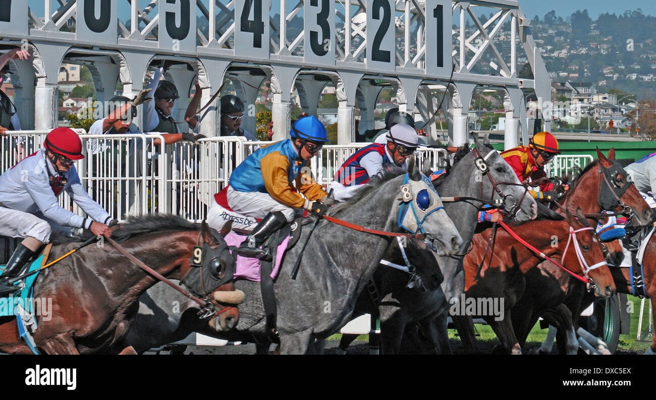 race horses break from the starting gate at Golden Gate fields in Albany California - Stock Image