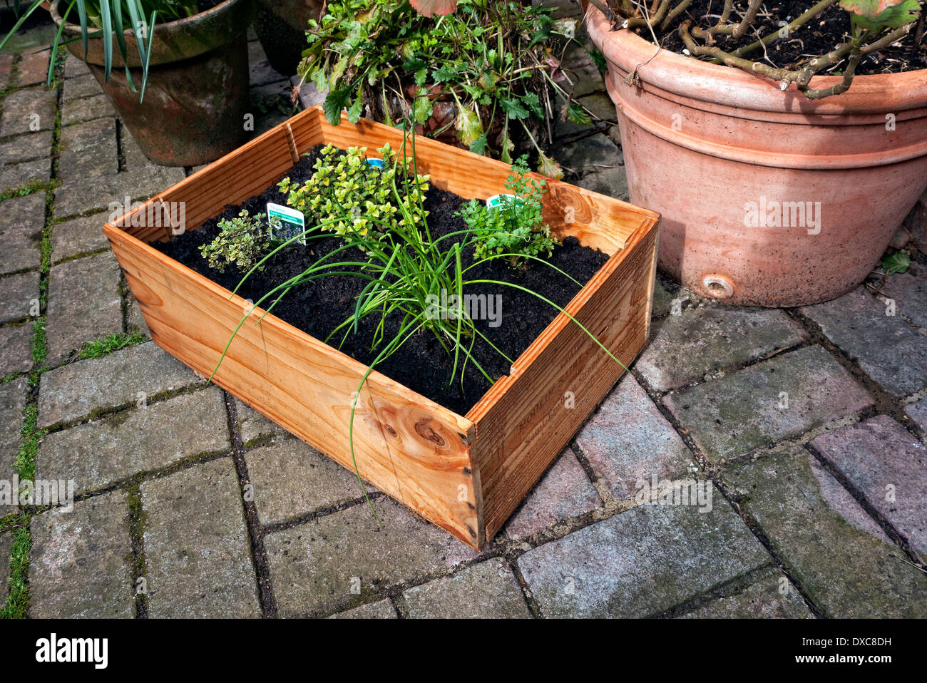 Wine case made into a herb garden. - Stock Image